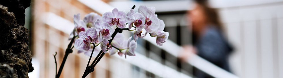 Orchids in LESSOR's  headquarters